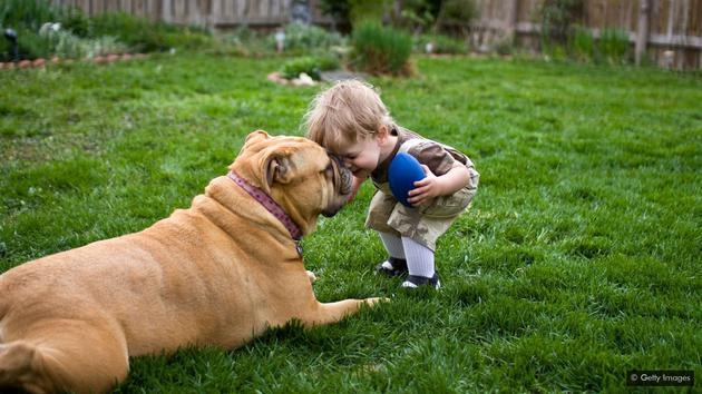 养猫狗或可降低患湿疹几率。