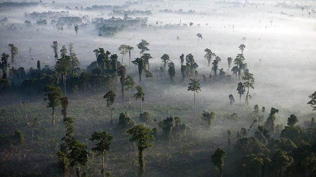 自第一次农业革命以来,植物的<a href=../ep/?%C9%FA%CE%EF--1.htm>生物</a>质量已经因人类活动减少了一半。