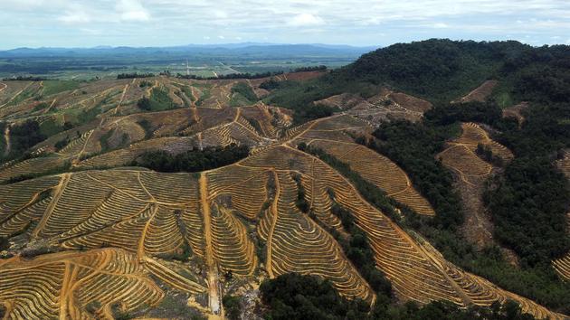 亚洲森林砍伐率居高不下