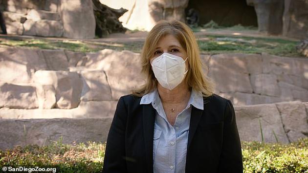 动物园的执行董事丽莎·彼得森表示,据信生活在园中的8只大猩猩感染了病毒,其中几只已经出现咳嗽