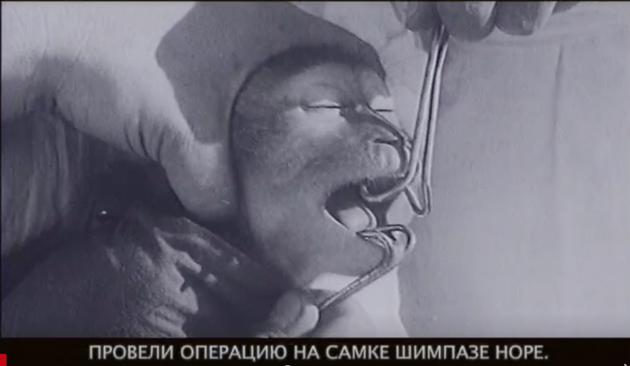 · 俄罗斯导演德米特里·德明的纪录片中,伊万诺夫实验室里的猩猩
