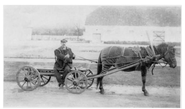 · 斑马和马的杂交成果,摄于 1913 年的俄国