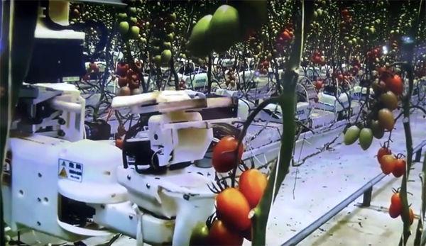 松下的西红柿采摘机器人,图片来自CTIMES