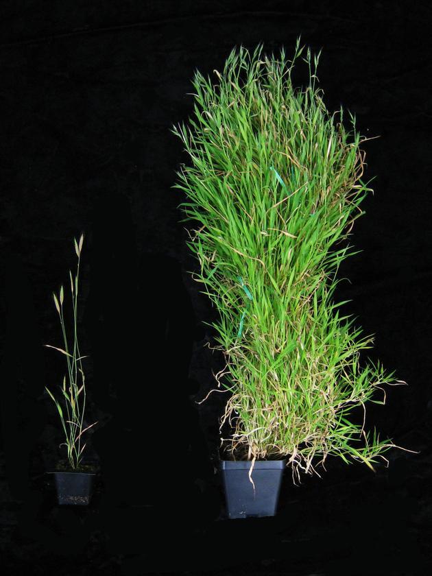 含羞草的秘密_隐藏的植物记忆:遗传是比记忆更强大的工具|植物|含羞草|记忆 ...