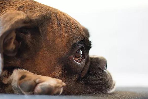世界狂犬病日:為什么狂犬病百分之百致死?