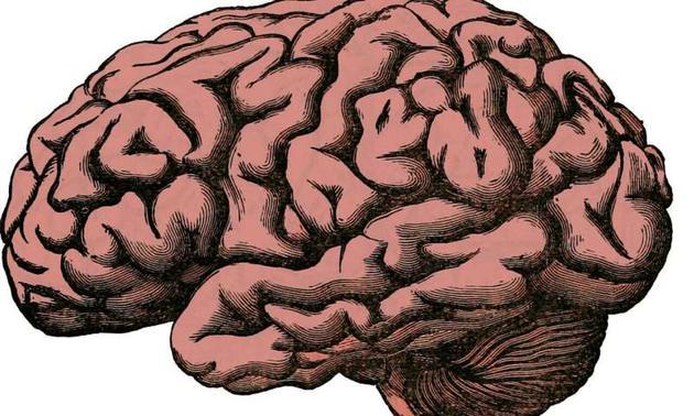最新研究报告提出宿主应对操控性寄生虫进化的4种策略:限制其进入大脑;增大操控成本;增大信号复杂性;增强抗变换性。