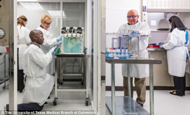 科学家在实验室里采用一系列复杂的仪器,使用每个受体猪自身细胞和营养物质用于清洗和培育新肺器官。