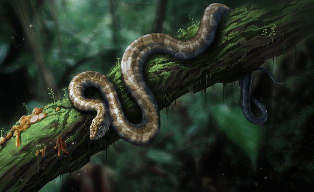 缅甸蛇类复原图 绘图刘毅