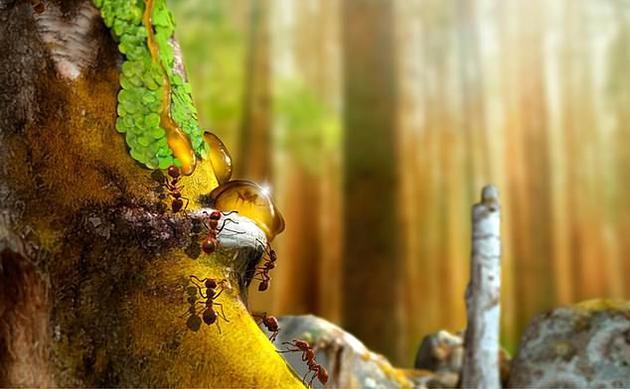 一些琥珀中还包含着小年蜘蛛、蚂蚁、蠓虫、地钱和苔藓植物,它们是冈瓦纳大陆南部发现最迂腐的动物和植物。