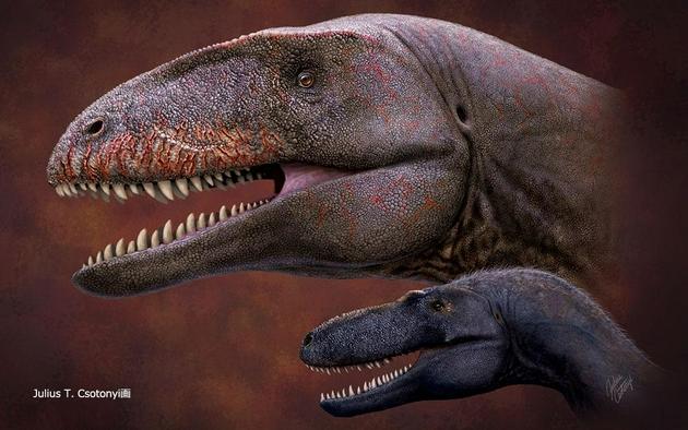 霸王龙之前的顶级恐龙霸主:劳亚古大陆最后幸存的鲨齿龙