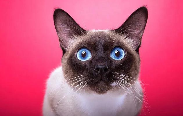 猫能听懂自己的名字,但它们搭理你吗?