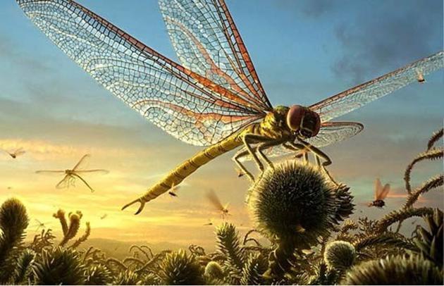 石炭纪的蜻蜓可以长到1米左右,非常巨大。