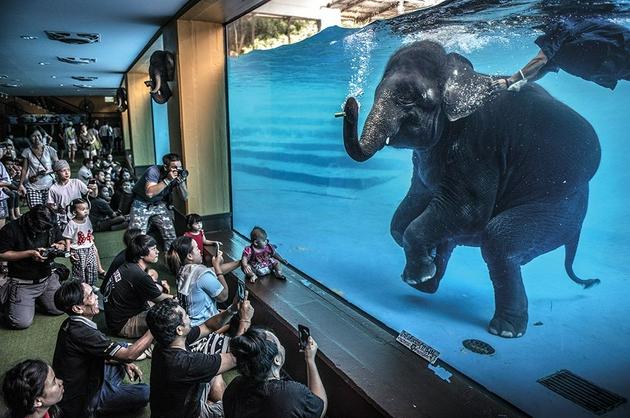 野生动物摄影大赛,一起围观大自然的精彩瞬间(组图)