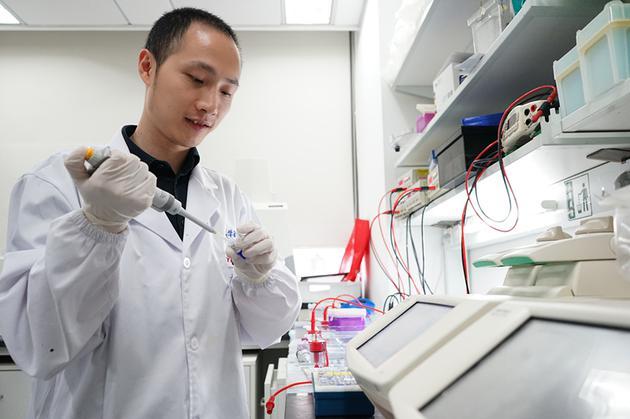 ▲楊輝在實驗室進行基因編輯相關實驗