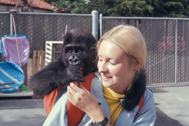 帕特森和可可在旧金山动物园,此时可可还只是个小家伙。
