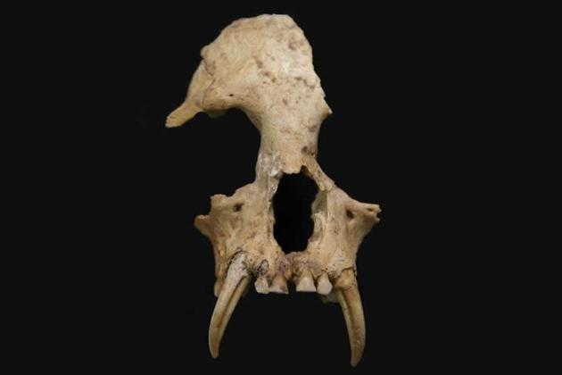 2006年,考古人员在战国时秦陵园挖掘了13个陪葬坑,其中12号坑内出土了很多明显不是家畜的动物骨头