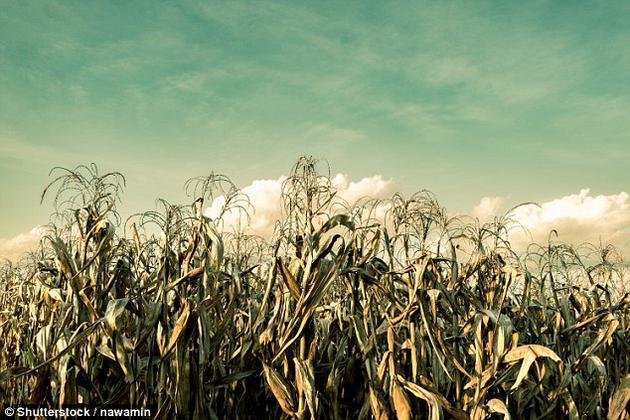 为地球遮挡阳光会让温度降下来,帮助农作物生长得更好,但农作物的生长需要阳光,因此遮挡阳光也会有负面影响。