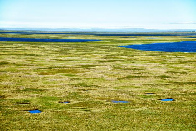 图中是雅库特北极冻土带,雅库特位于西伯利亚的东北角,那里冻土层覆盖着猛犸时期的土壤。最新研究表明,北极地区快速消融,将释放掩埋在永久冻土层中的大量远古碳物质,从而加速气候变化