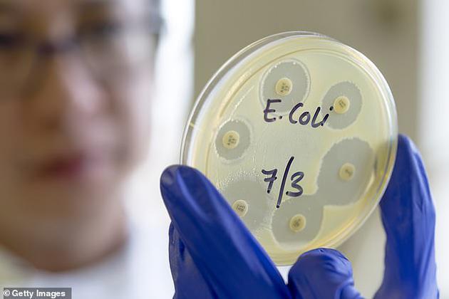 由麻省理工学院共同创立的公司Synlogic发明的转基因细菌可通过清除肠道毒素、治疗肝部与肠道疾病