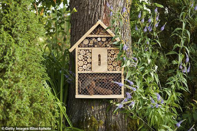 目前,美国环保部门已禁止使用与蜜蜂死亡相关的杀虫剂,欧洲国家也颁布了类似的禁令。