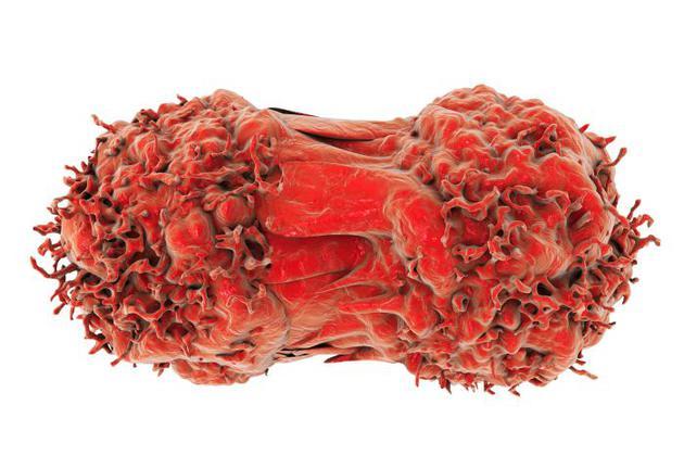 癌细胞可以无限分裂,如何做到这一点的指令隐藏在DNA之中。