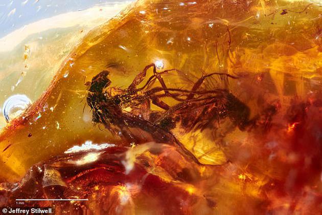 随着时间推移,树脂逐渐强硬成琥珀,成为这对苍蝇的坟墓,它们的双腿照样缠绕在一首。原形上, <a href=