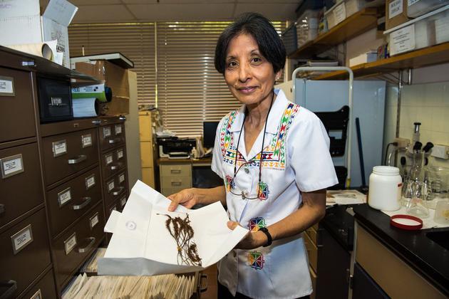 诺丽丝•萨拉扎•艾伦在史密森尼热带研究所研究苔藓植物。
