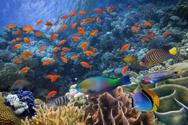 鱼会被水下不同个体发出的声音弄糊涂吗?答案是,并不会!
