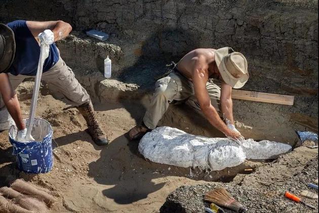 德帕玛和助手正在用石膏保存化石痕迹