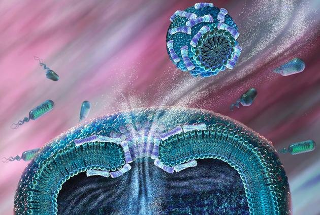 抗微生物肽穿过细菌细胞膜的模拟场景