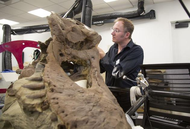 """2、美国西雅图博克自然历史文化博物馆古生物学家托马斯•卡尔正在检查被称为""""爱塔夫斯之爱""""的霸王龙头骨。"""