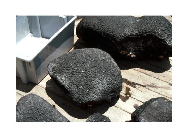 詹姆斯·海因在夏威夷附近收集的锰铁结壳。尽管外观普通,但这些岩石在科学上有着重要意义
