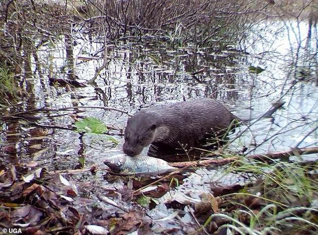 切尔诺贝利辐射禁区新发现:野生动物正蓬勃发展