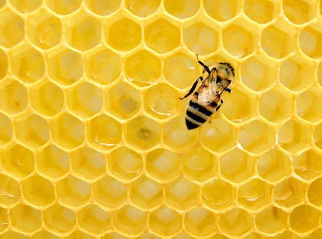 美国农业部表示,每3口食物中就有1口食物与蜜蜂密切相关,它们除了帮助人类生产食物,这种聪明的昆虫还为世界上80%的植物授粉,如果没有它们,植物将无法生长,令人惊讶的是,一个蜂群每天可以授粉3亿朵花。