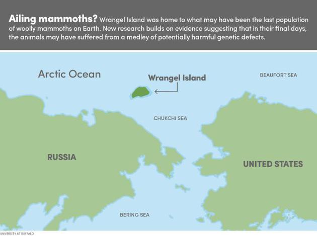 2、图中是弗兰格尔岛的位置,这是一个孤立偏远的岛屿环境,地球上最后一批猛犸在这里生存了下来,直到大约4000年前才消亡。