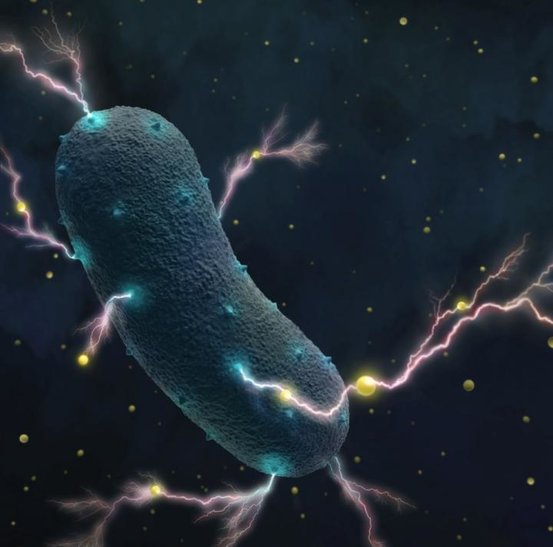 科学家第一次发现我们的肠道细菌也有发电能力