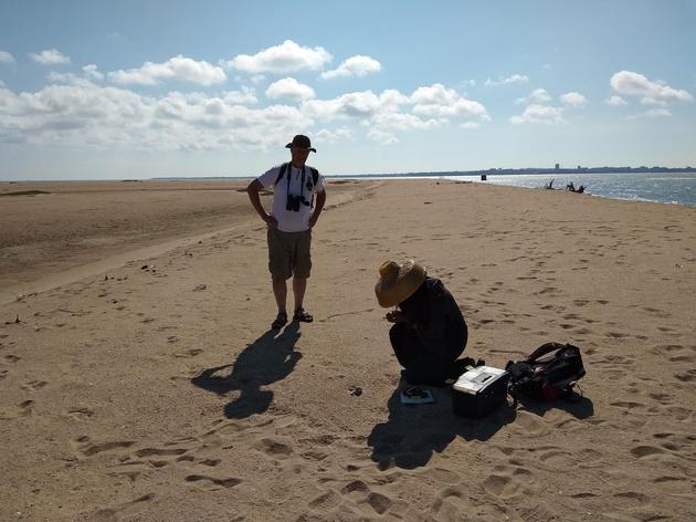 图5 中山大学鸟类研究者正在烈日炎炎湛江的东海岛上测量环颈鸻个体(摄影师:林鑫)