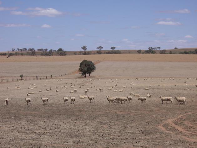 """21世纪初,澳大利亚遭遇的严重干旱启发学者发明了""""乡痛症""""(Solastalgia)一词,用于描述环境变化对人类造成的痛苦"""