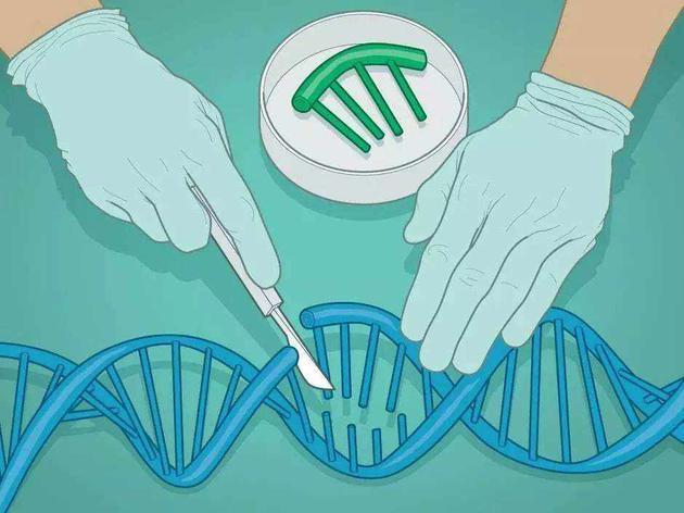 中国科学家研究建立了一种被命名为GOTI的新型基因编辑脱靶检测技术
