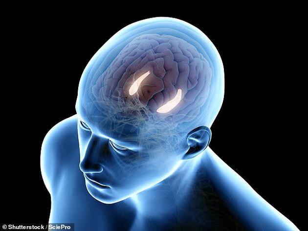 人类记忆的形成和唤起可能因为一种脑电波振荡
