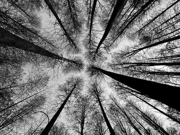树植类第二名获奖作品