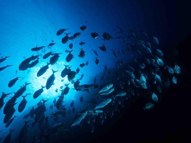 每天都在上演的大自然奇迹:塑造地球的海洋动物迁移