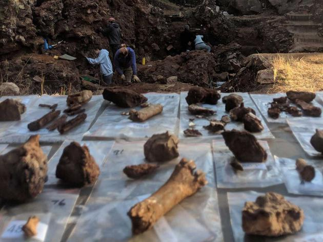 在Drimolen古洞穴系统中发掘出来的化石