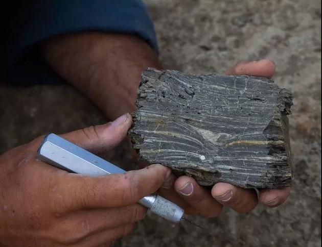 德帕玛的发现可能填补了化石记录中的空白