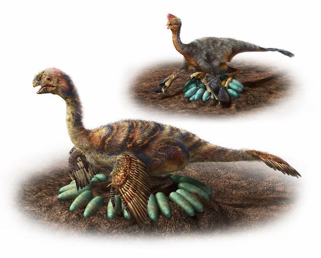 2000公斤的恐龙压不碎蛋?孵蛋有技巧