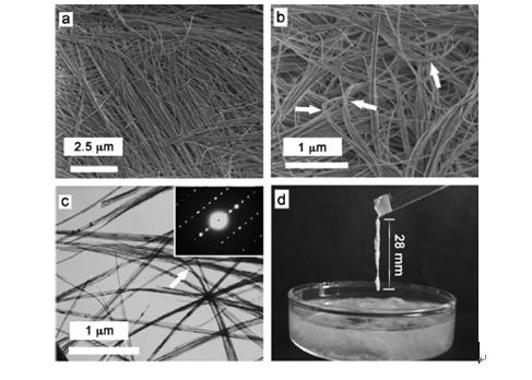 所制备的羟基磷灰石超长纳米线的扫描电子显微图片(a, b)和透射电子显微图片(c),纳米线可自然弯曲,表明具有良好的柔韧性; (d) 羟基磷灰石超长纳米线浆料可以形成很长的纤维(约28 毫米),是制造新型无机耐火纸的理想原料