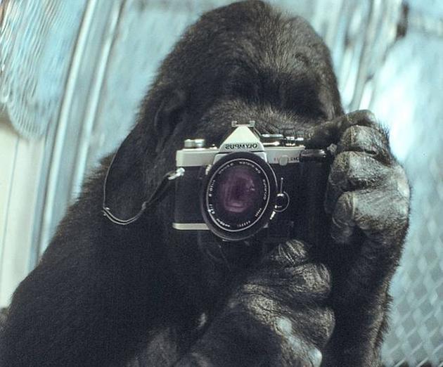 可可用相机对着镜子自拍的画面登上了国家地理杂志的封面。