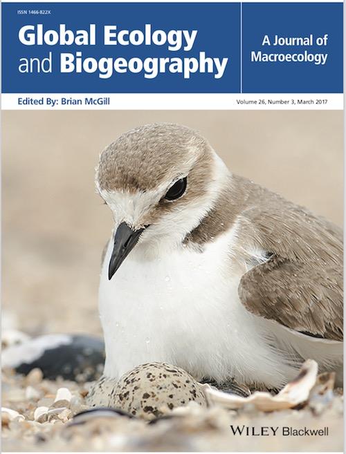 图3 孵卵中的环颈鸻(我们的研究作为封面文章发表在《Global Ecology and Biogeography》(全球生态与生物地理学)杂志上)