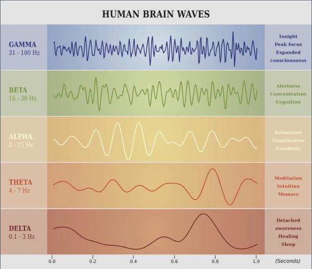 每栽同步脑活动都与特定的大脑功能相关。