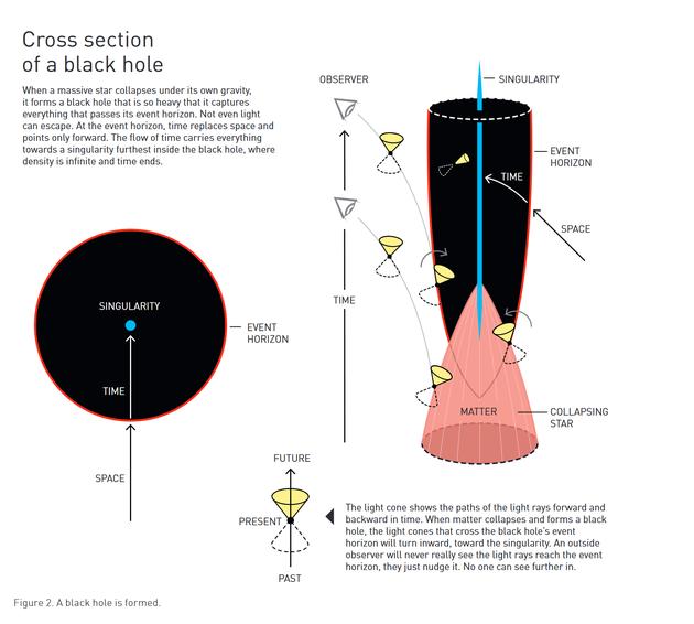 黑洞的形成 (左上) 黑洞横截面 当一颗巨大的恒星在自身引力作用下塌缩时,它会形成一个质量很大的黑洞,捕获穿越其事件视界的一切东西。哪怕是光都无法逃离黑洞。在事件视界中,时间取代空间,所有路径向内指。时间流将一切带向黑洞最深处的奇点——在这里,密度是无限的,时间也止于此。 (右下) 光锥表示光线在时间上向前和向后的路径。当物质塌缩并形成黑洞时,穿过黑洞事件视界的光锥将向内朝奇点运动。外部的观察者永远不会真正看到光线到达事件视界。他们看到的,只是光线接近事件视界。之后的就没有人能看到。